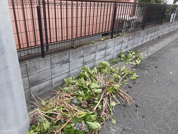 埼玉県さいたま市岩槻区 K様邸 屋根塗装・外壁塗装 足場設置前に植木の伐採を行いました (1)